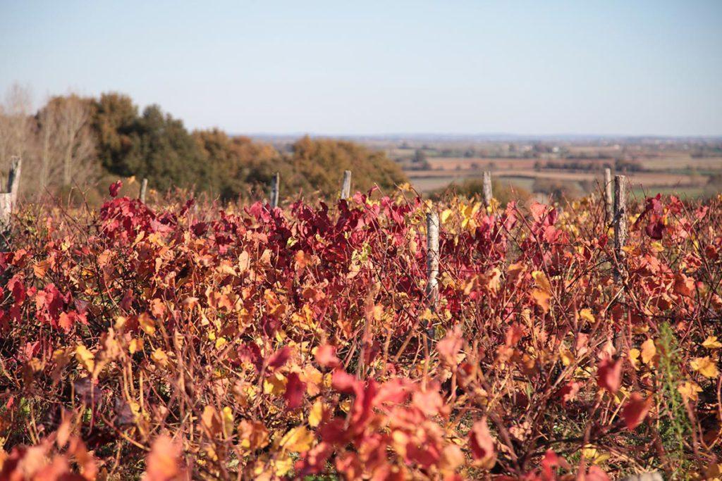 vignobles aubance